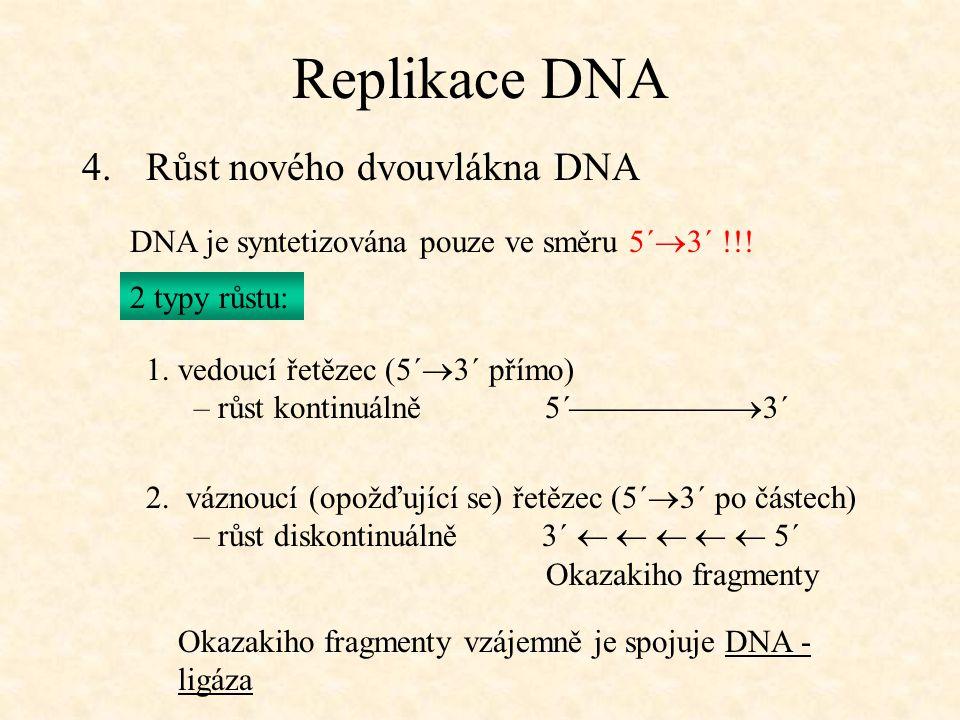 Replikace DNA Růst nového dvouvlákna DNA