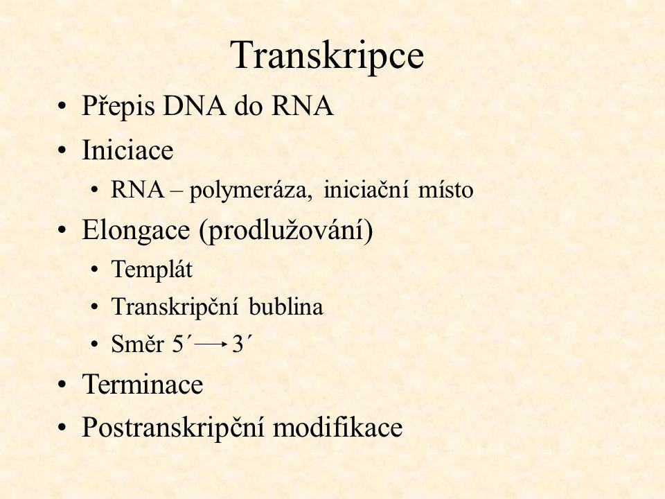 Transkripce Přepis DNA do RNA Iniciace Elongace (prodlužování)