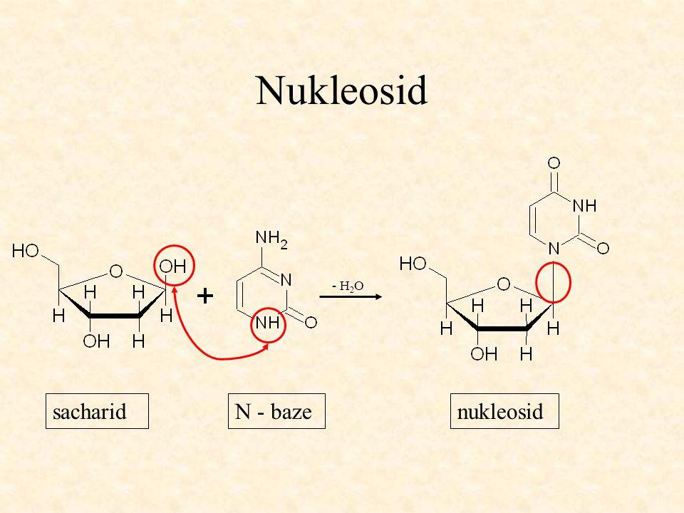 Nukleosid - H2O sacharid N - baze nukleosid