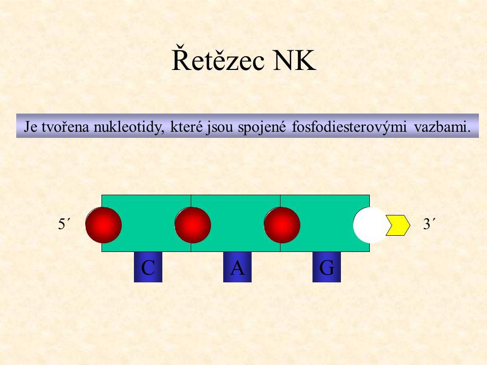 Je tvořena nukleotidy, které jsou spojené fosfodiesterovými vazbami.