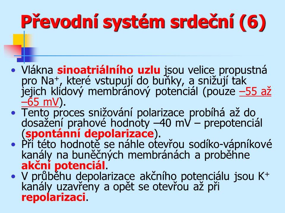Převodní systém srdeční (6)