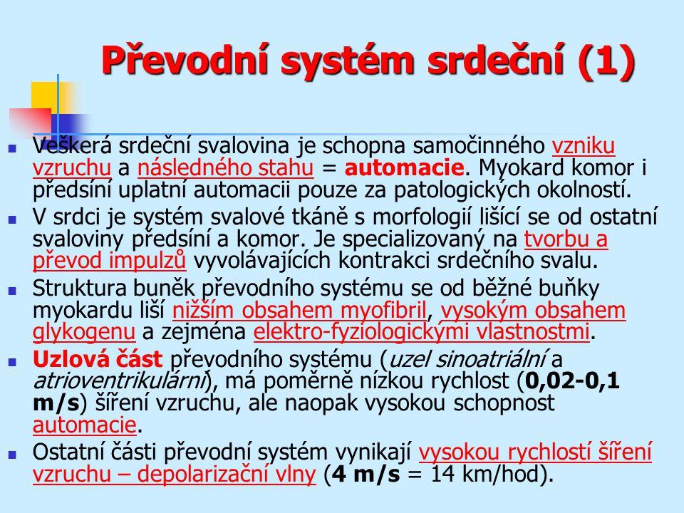 Převodní systém srdeční (1)