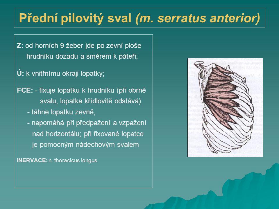 Přední pilovitý sval (m. serratus anterior)