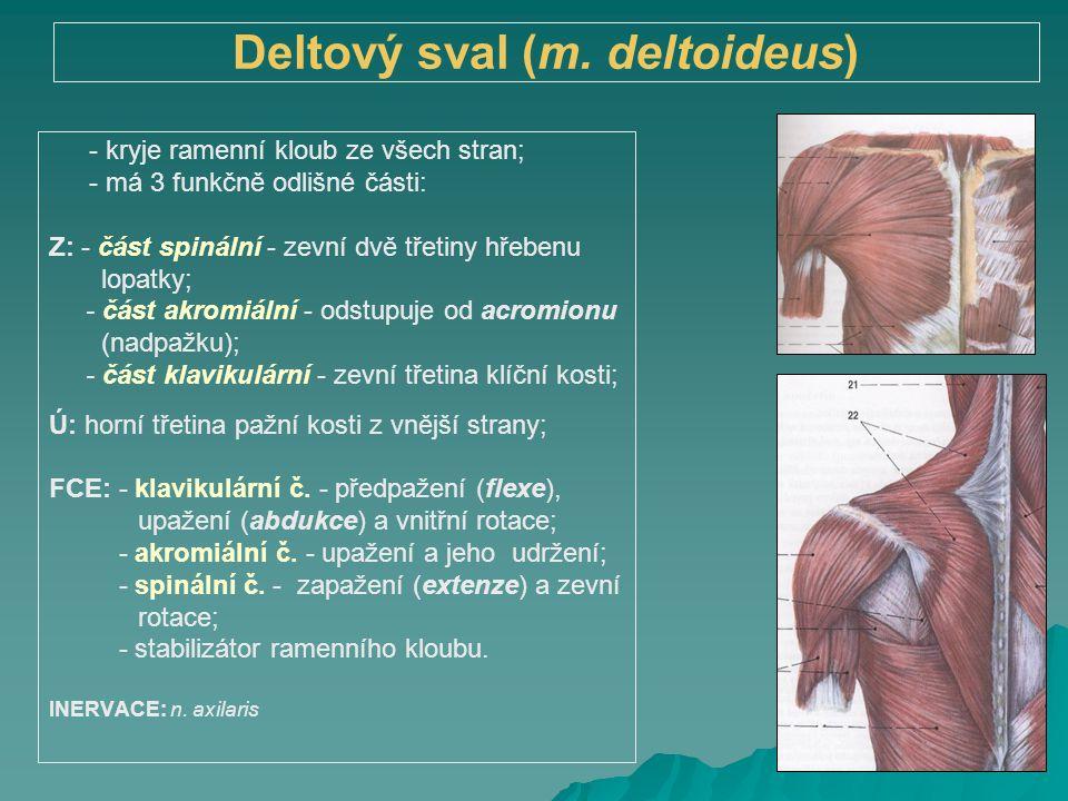 Deltový sval (m. deltoideus)