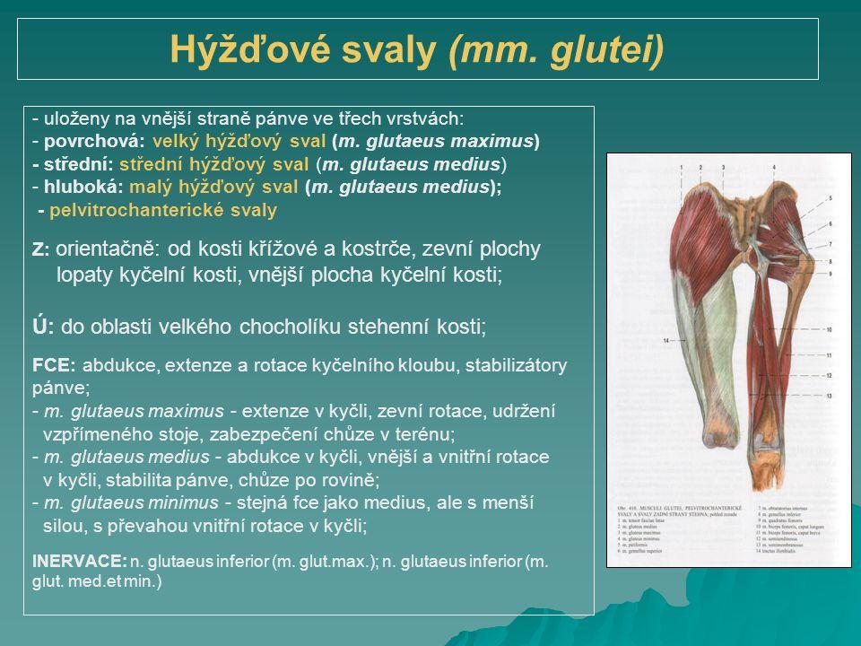 Hýžďové svaly (mm. glutei)