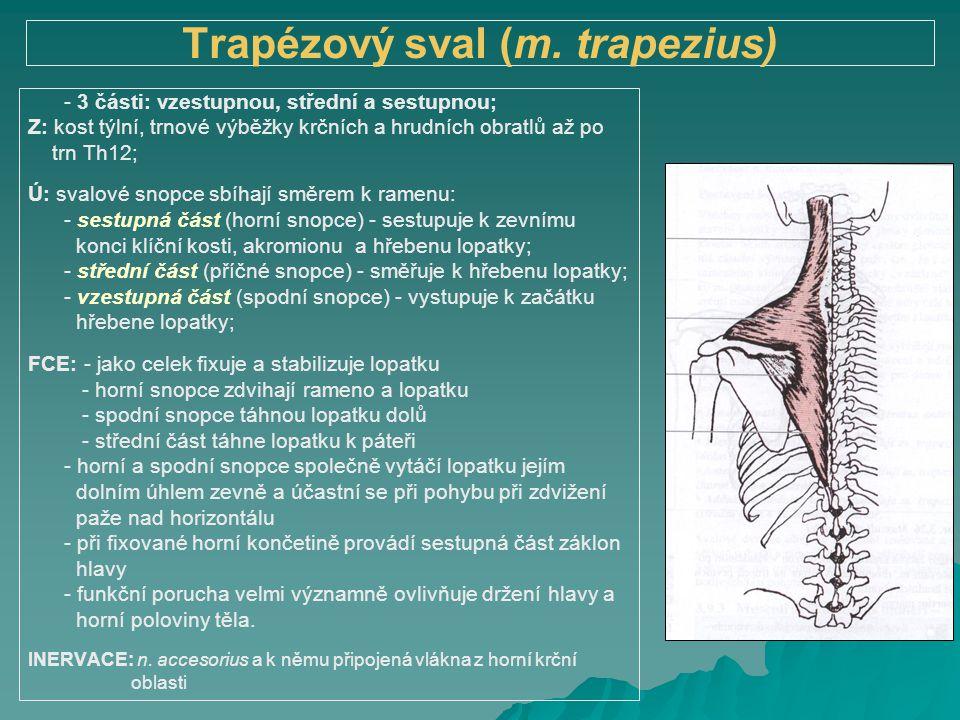 Trapézový sval (m. trapezius)