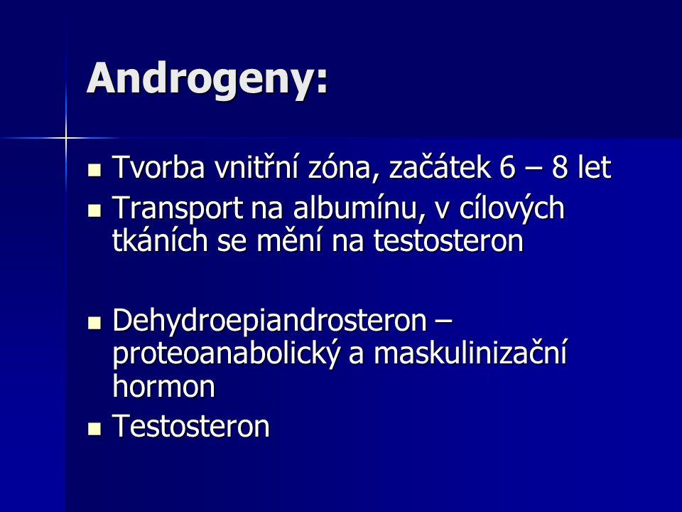 Androgeny: Tvorba vnitřní zóna, začátek 6 – 8 let