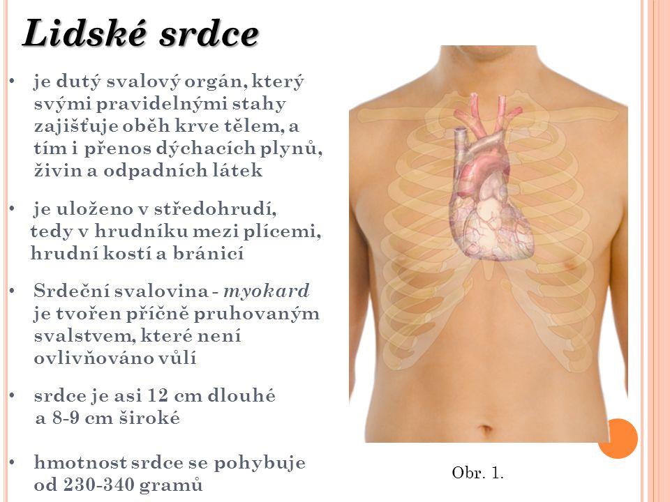 Lidské srdce je dutý svalový orgán, který svými pravidelnými stahy zajišťuje oběh krve tělem, a tím i přenos dýchacích plynů, živin a odpadních látek.