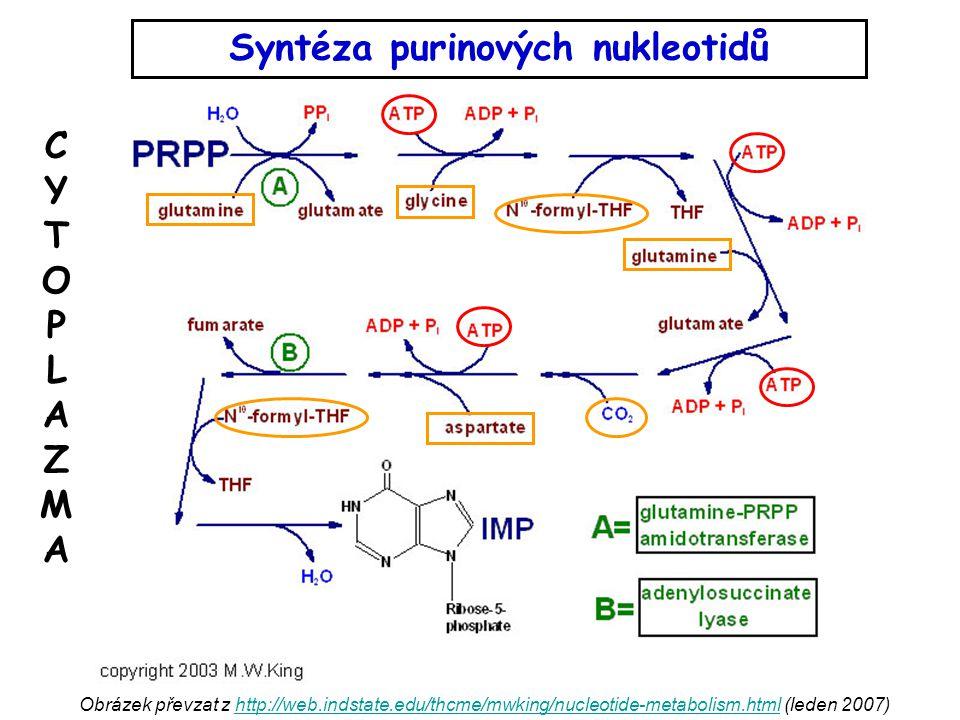 Syntéza purinových nukleotidů