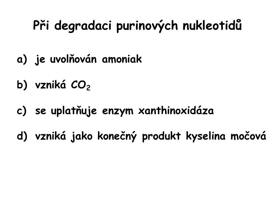 Při degradaci purinových nukleotidů
