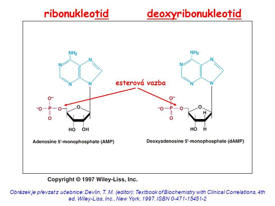 ribonukleotid deoxyribonukleotid
