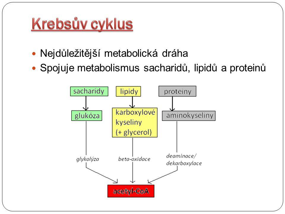 Krebsův cyklus Nejdůležitější metabolická dráha