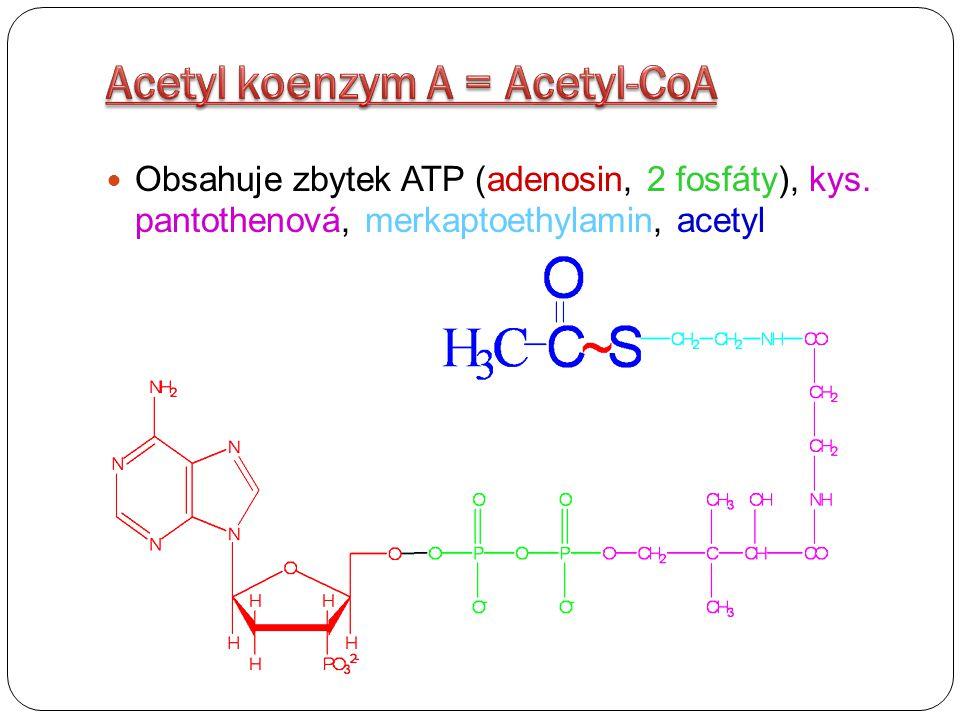 Acetyl koenzym A = Acetyl-CoA