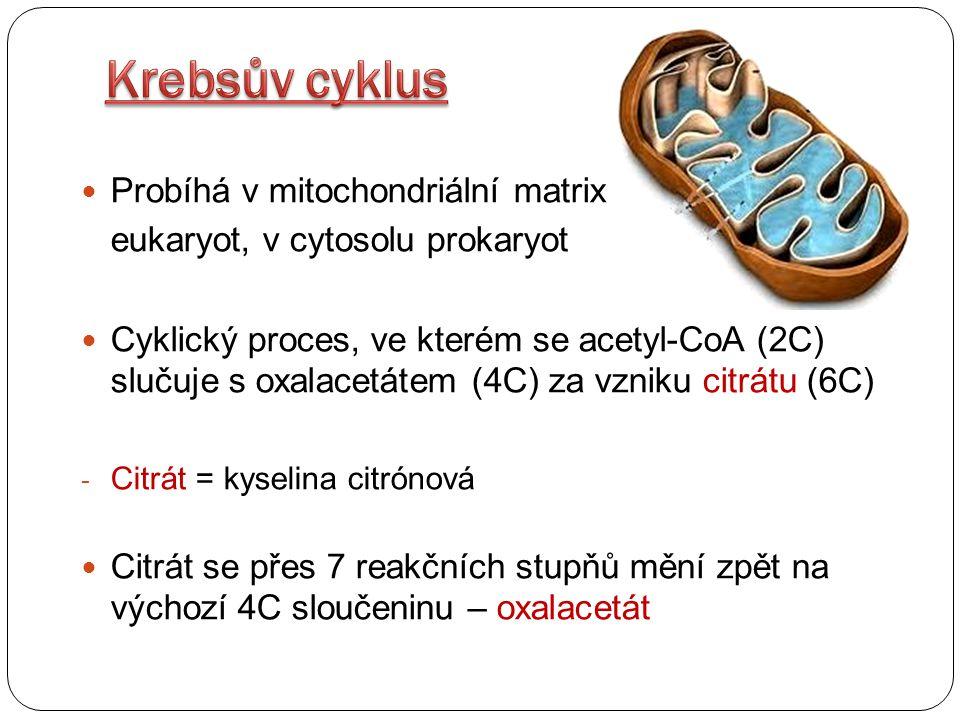 Krebsův cyklus Probíhá v mitochondriální matrix