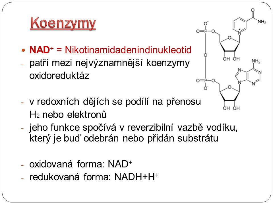 Koenzymy NAD+ = Nikotinamidadenindinukleotid