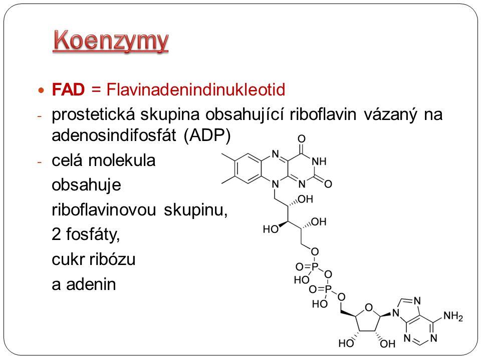 Koenzymy FAD = Flavinadenindinukleotid