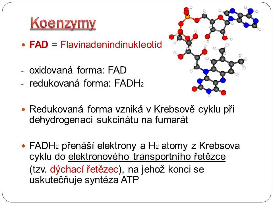 Koenzymy FAD = Flavinadenindinukleotid oxidovaná forma: FAD