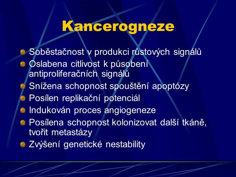Kancerogneze Soběstačnost v produkci růstových signálů