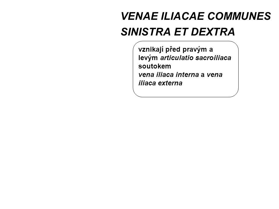VENAE ILIACAE COMMUNES SINISTRA ET DEXTRA