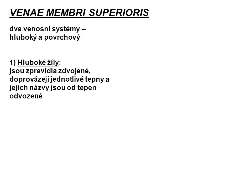 VENAE MEMBRI SUPERIORIS