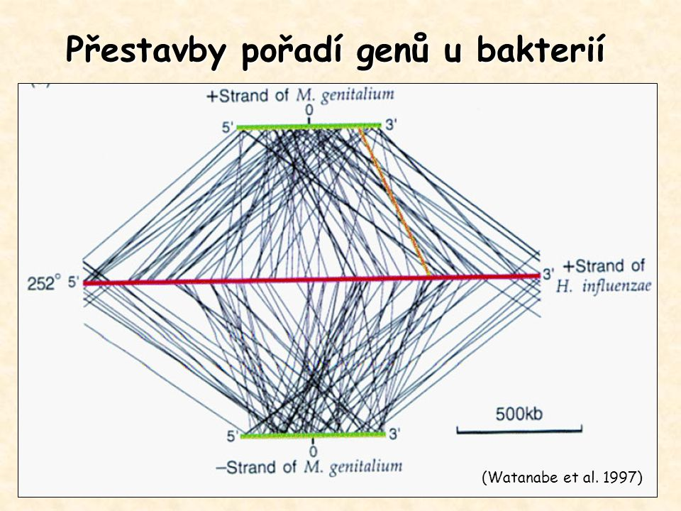 Přestavby pořadí genů u bakterií