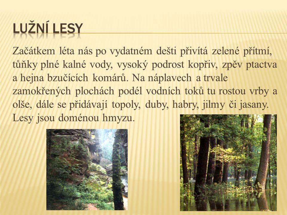Lužní lesy