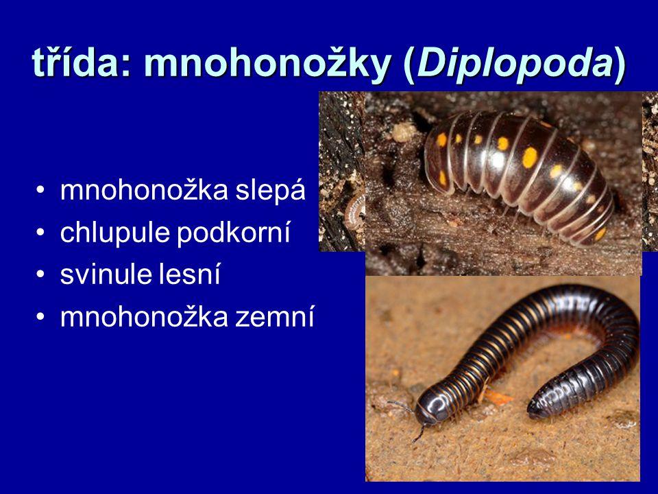 třída: mnohonožky (Diplopoda)