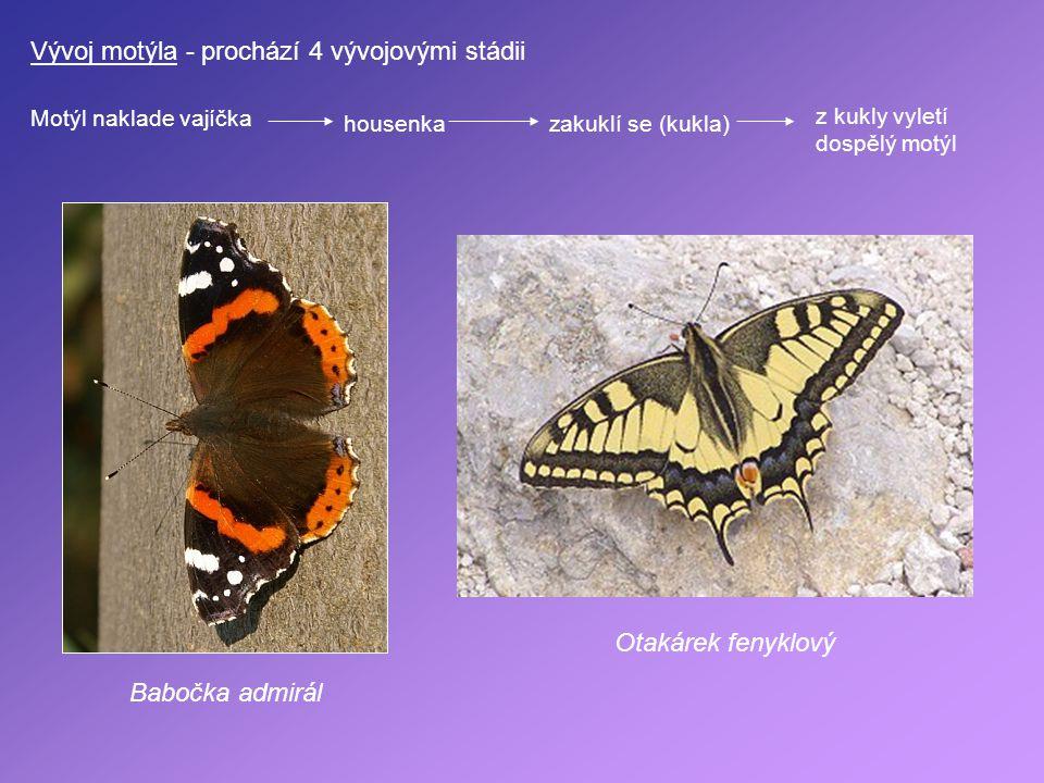 Vývoj motýla - prochází 4 vývojovými stádii