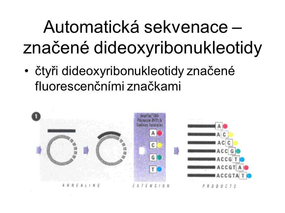 Automatická sekvenace – značené dideoxyribonukleotidy