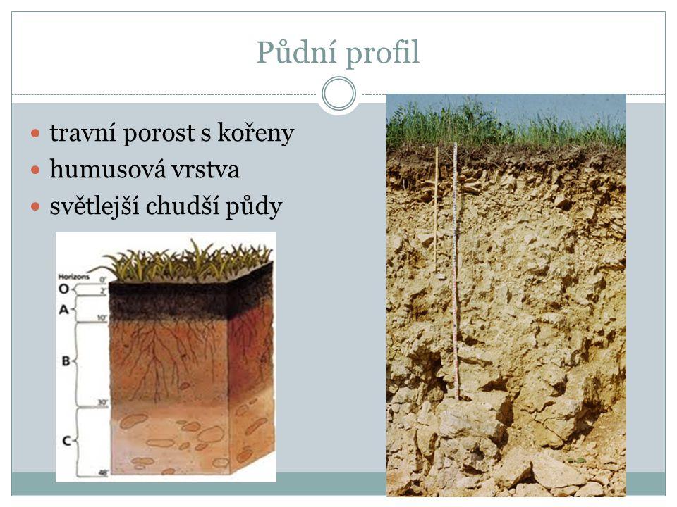 Půdní profil travní porost s kořeny humusová vrstva
