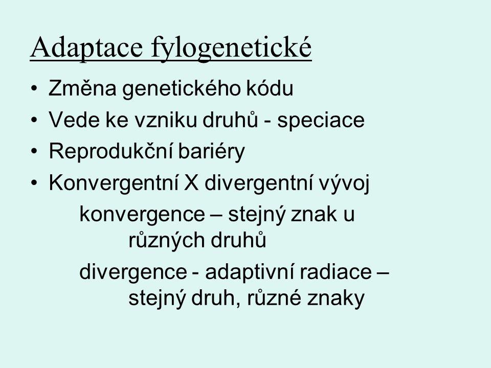 Adaptace fylogenetické
