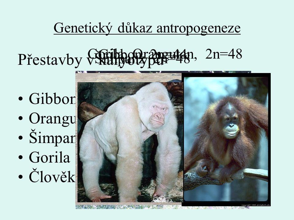 Genetický důkaz antropogeneze
