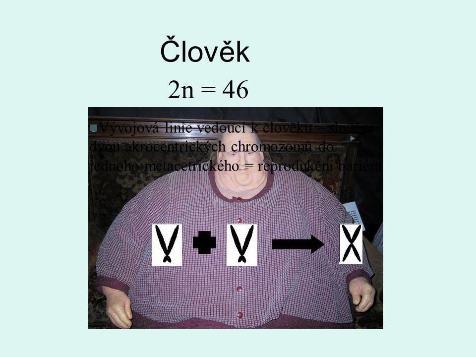 Člověk 2n = 46.
