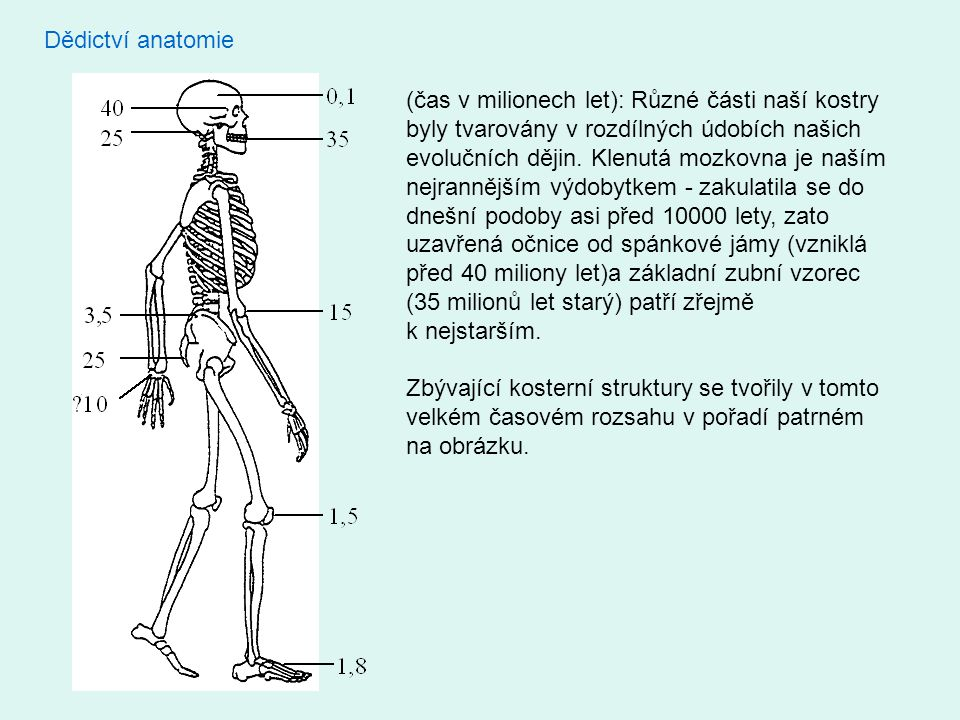 Dědictví anatomie