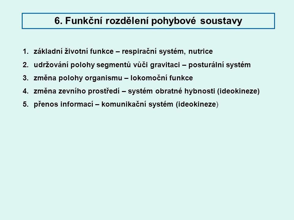 6. Funkční rozdělení pohybové soustavy