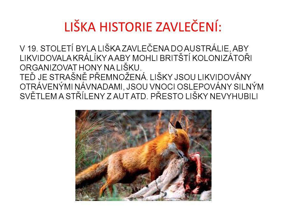LIŠKA HISTORIE ZAVLEČENÍ: