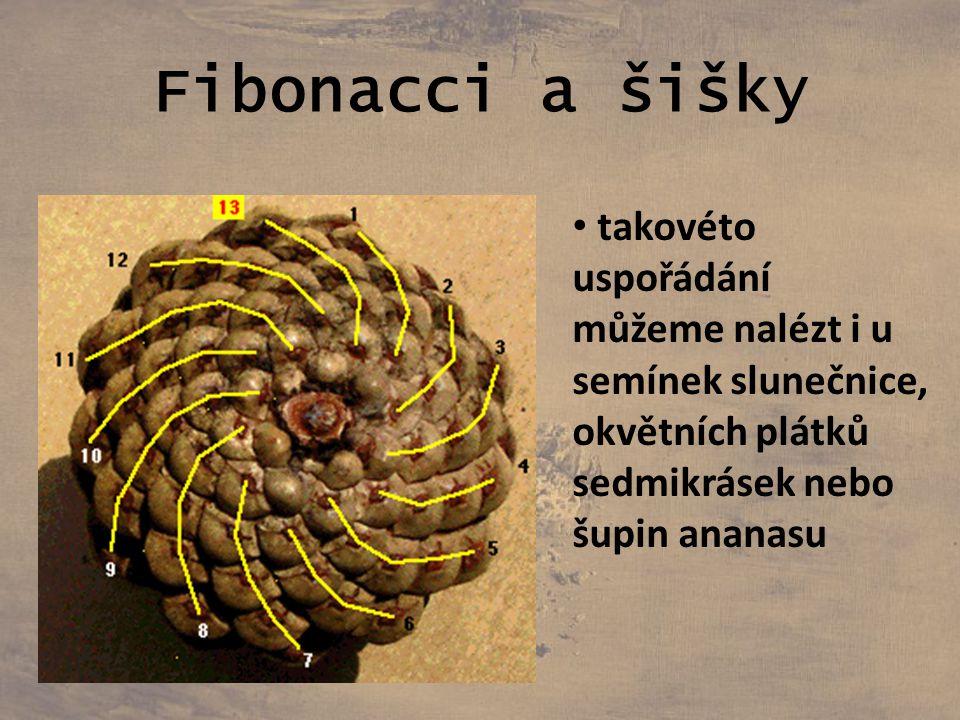 Fibonacci a šišky takovéto uspořádání můžeme nalézt i u semínek slunečnice, okvětních plátků sedmikrásek nebo šupin ananasu.