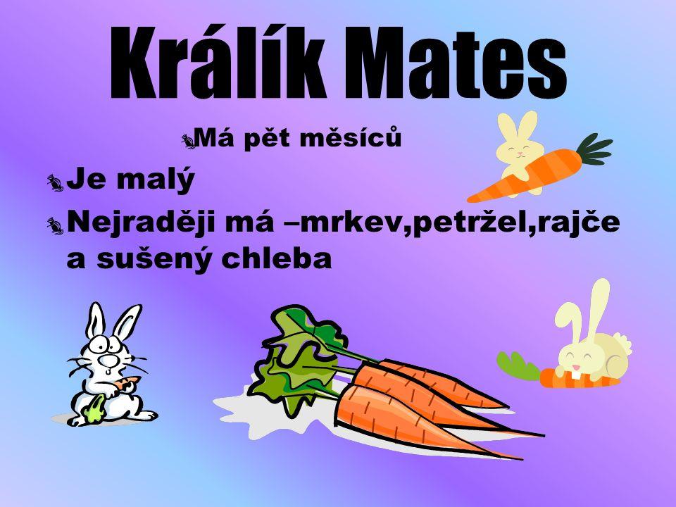 Králík Mates Je malý Nejraději má –mrkev,petržel,rajče a sušený chleba