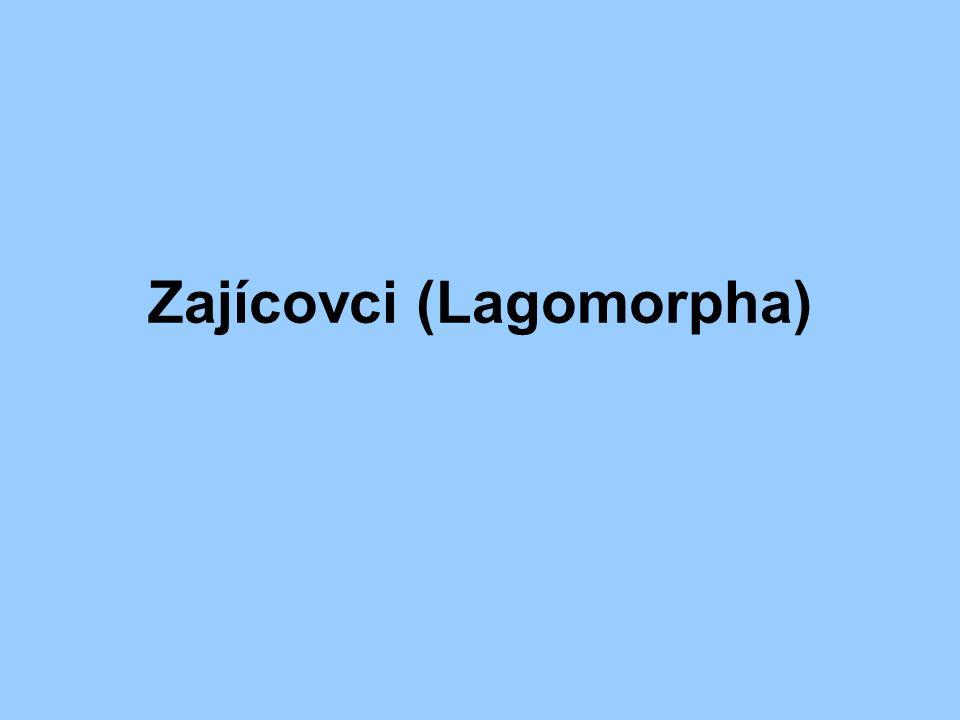 Zajícovci (Lagomorpha)