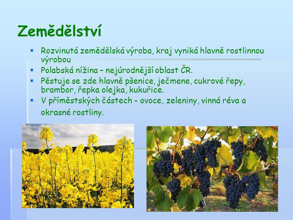 Zemědělství Rozvinutá zemědělská výroba, kraj vyniká hlavně rostlinnou výrobou. Polabská nížina – nejúrodnější oblast ČR.
