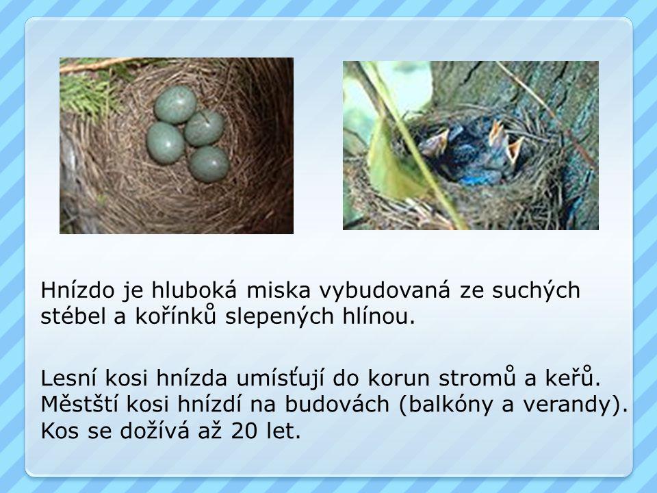 Hnízdo je hluboká miska vybudovaná ze suchých