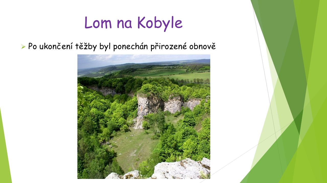 Lom na Kobyle Po ukončení těžby byl ponechán přirozené obnově