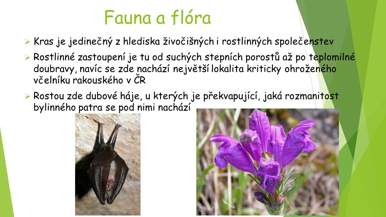 Fauna a flóra Kras je jedinečný z hlediska živočišných i rostlinných společenstev.