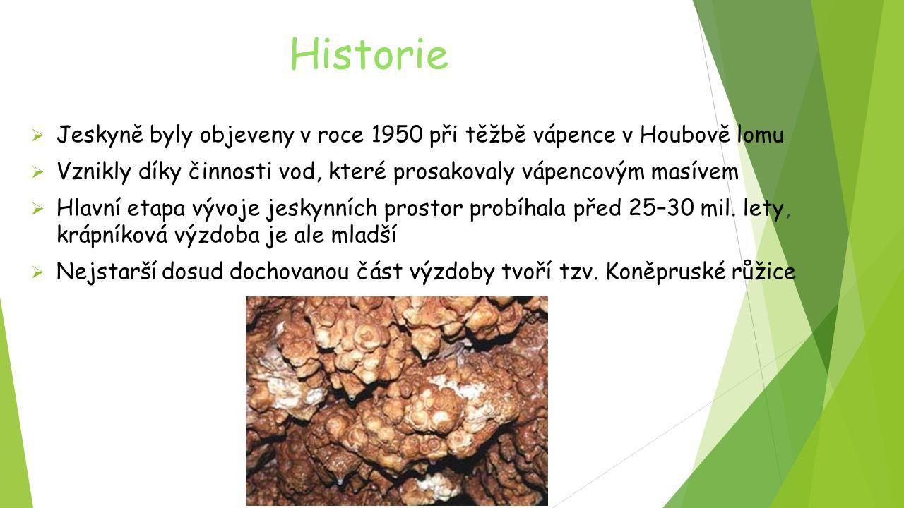 Historie Jeskyně byly objeveny v roce 1950 při těžbě vápence v Houbově lomu. Vznikly díky činnosti vod, které prosakovaly vápencovým masívem.