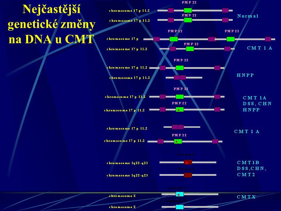 Nejčastější genetické změny na DNA u CMT