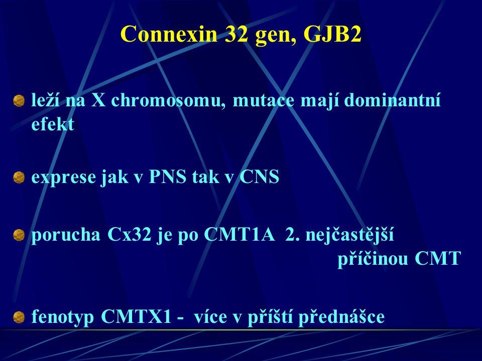 Connexin 32 gen, GJB2 leží na X chromosomu, mutace mají dominantní efekt. exprese jak v PNS tak v CNS.