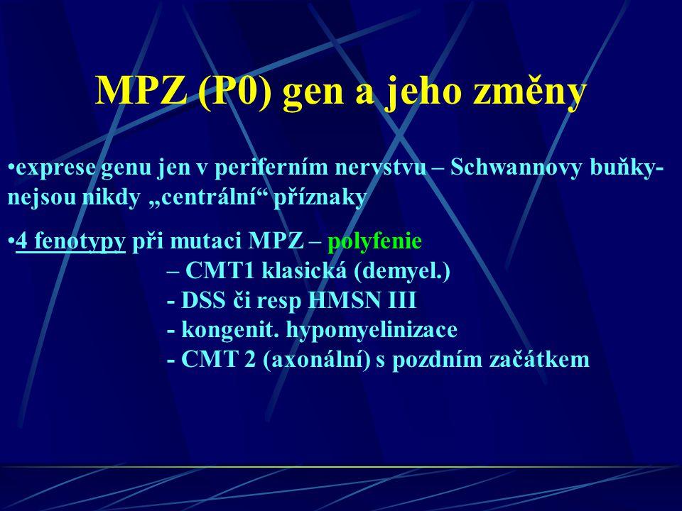 """MPZ (P0) gen a jeho změny exprese genu jen v periferním nervstvu – Schwannovy buňky- nejsou nikdy """"centrální příznaky."""
