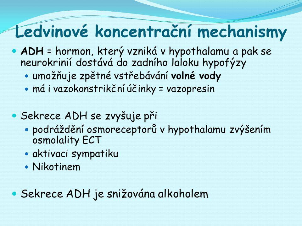 Ledvinové koncentrační mechanismy