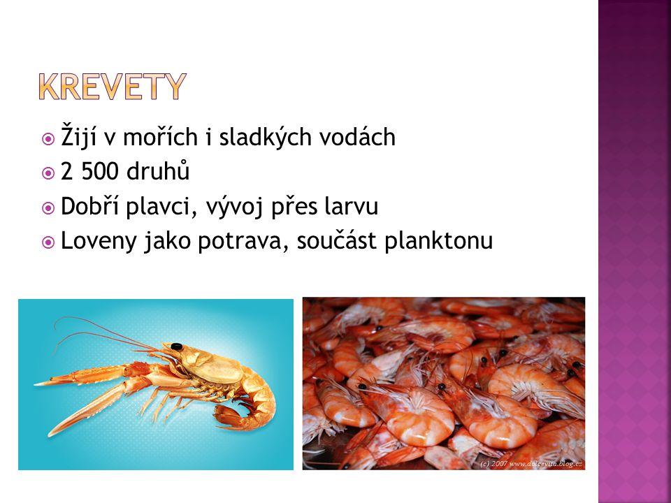 krevety Žijí v mořích i sladkých vodách 2 500 druhů