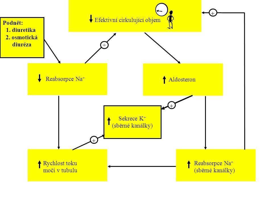+ + + + Efektivní cirkulující objem Podnět: 1. diuretika